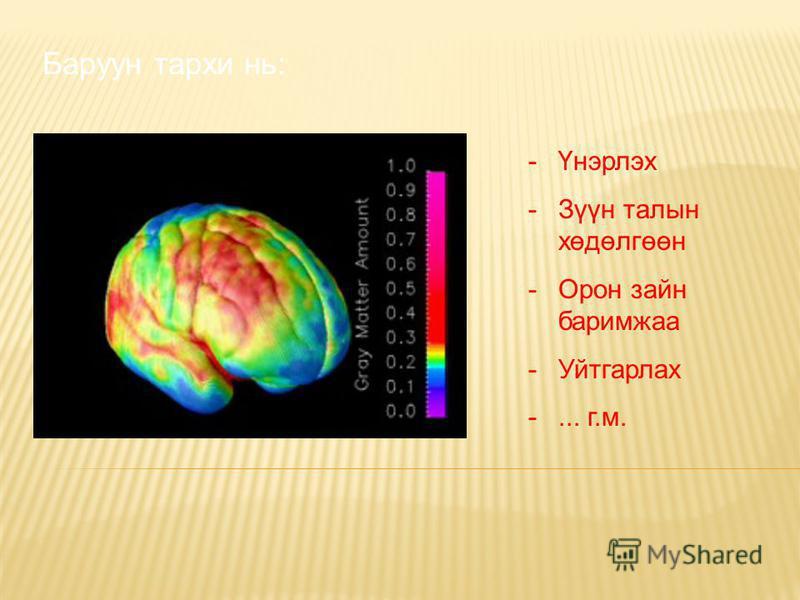 Баруун тархи нь: -Үнэрлэх -Зүүн талын хөдөлгөөн -Орон зайн баримжаа -Уйтгарлах -... г.м.