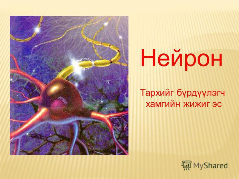 Нейрон Тархийг бүрдүүлэгч хамгийн жижиг эс