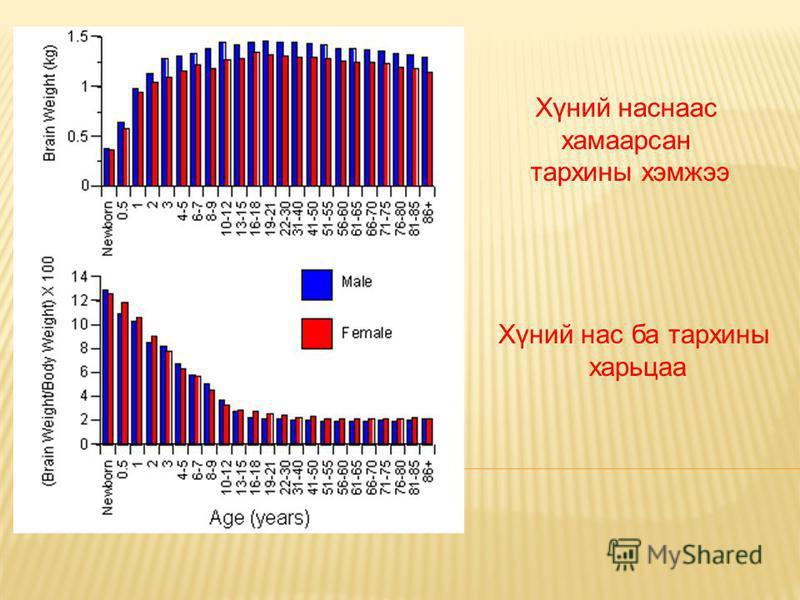 Хүний наснаас хамаарсан тархины хэмжээ Хүний нас ба тархины харьцаа