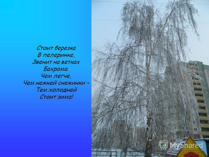 Стоит березка В пелеринке, Звенит на ветках Бахрома. Чем легче, Чем нежней снежинки - Тем холодней Стоит зима!