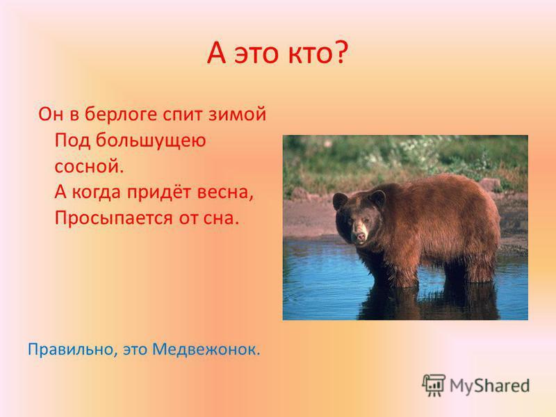 А это кто? Он в берлоге спит зимой Под большущею сосной. А когда придёт весна, Просыпается от сна. Правильно, это Медвежонок.