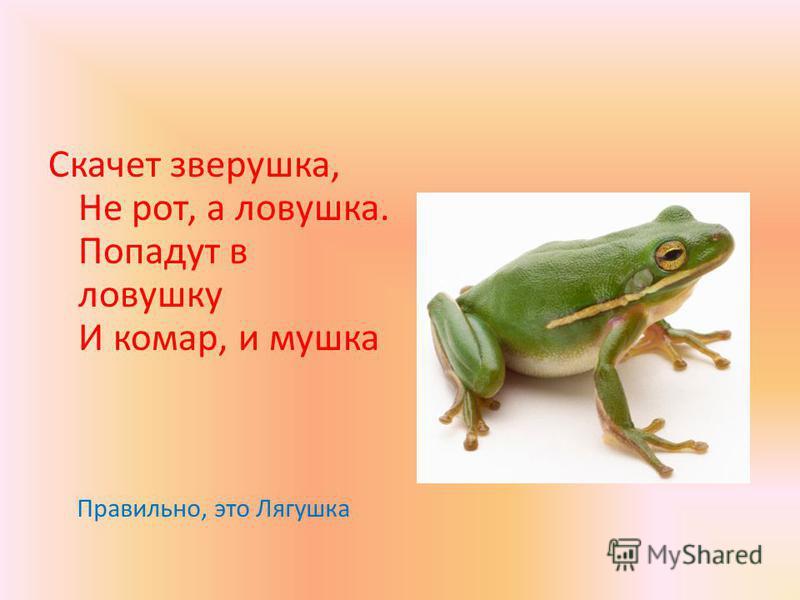 Скачет зверушка, Не рот, а ловушка. Попадут в ловушку И комар, и мушка Правильно, это Лягушка