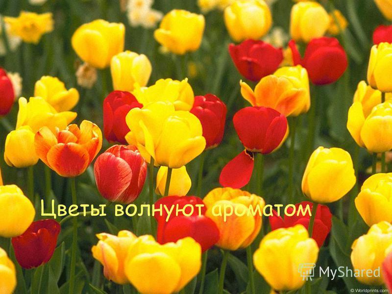 Цветы волнуют ароматом