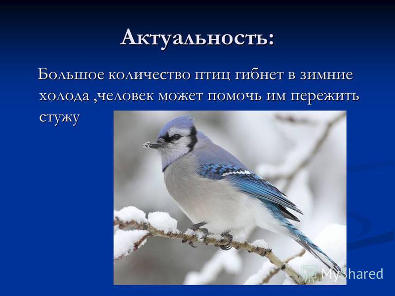 Актуальность: Большое количество птиц гибнет в зимние холода,человек может помочь им пережить стужу Большое количество птиц гибнет в зимние холода,человек может помочь им пережить стужу