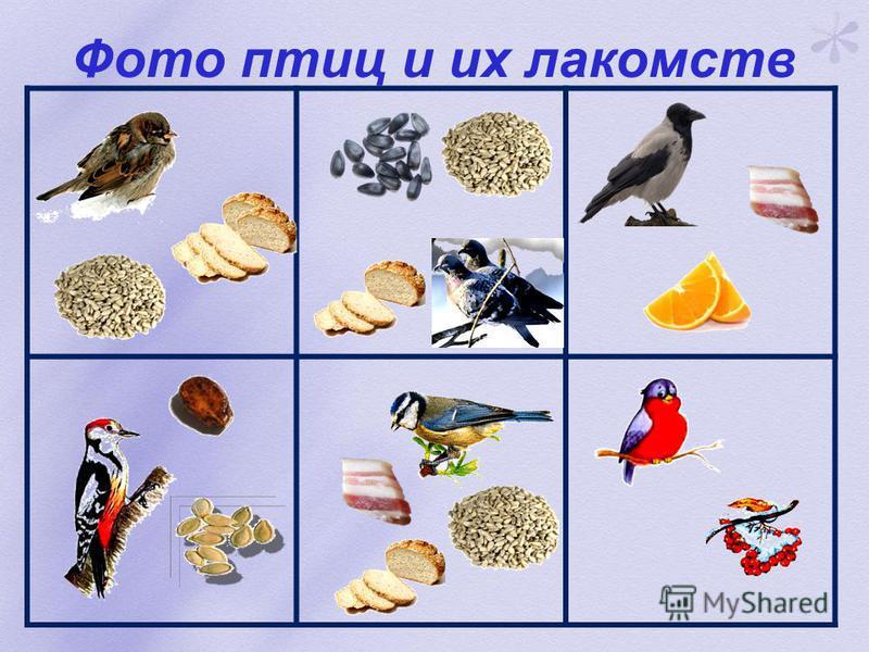 Игра «Не зевай, птиц скорее ты сосчитай»
