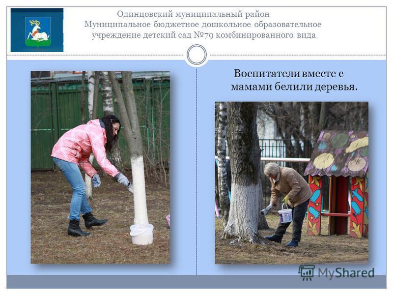 Одинцовский муниципальный район Муниципальное бюджетное дошкольное образовательное учреждение детский сад 79 комбинированного вида Воспитатели вместе с мамами белили деревья.