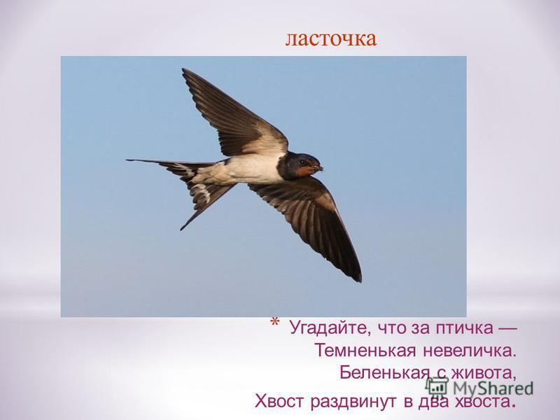* Угадайте, что за птичка Темненькая невеличка. Беленькая с живота, Хвост раздвинут в два хвоста. ласточка