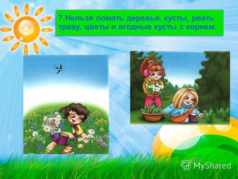 7. Нельзя ломать деревья, кусты, рвать траву, цветы и ягодные кусты с корнем.