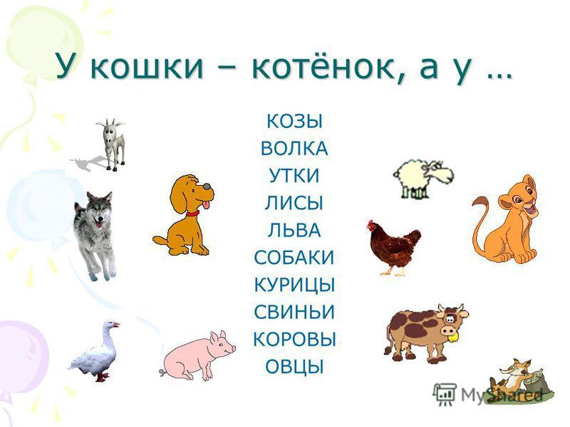 У кошки – котёнок, а у … КОЗЫ ВОЛКА УТКИ ЛИСЫ ЛЬВА СОБАКИ КУРИЦЫ СВИНЬИ КОРОВЫ ОВЦЫ