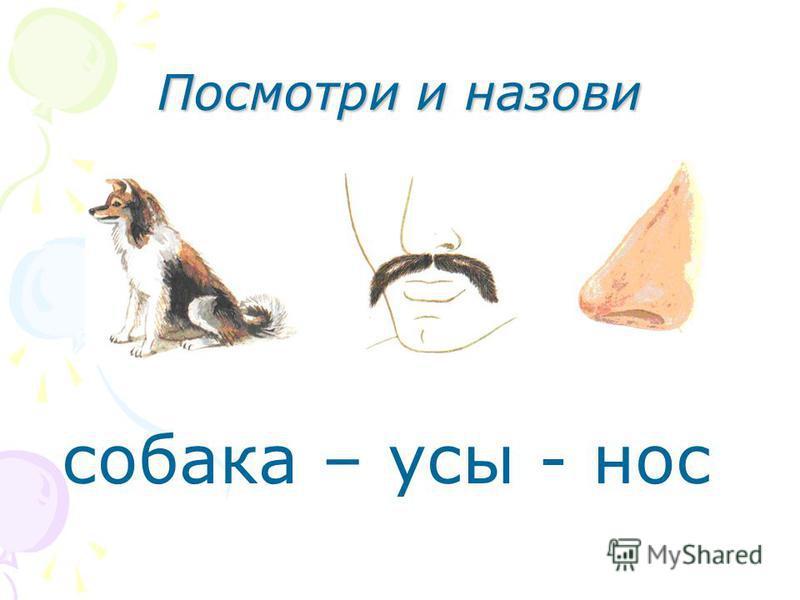 Посмотри и назови собака – усы - нос