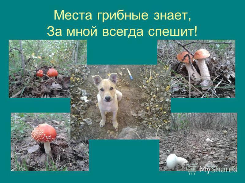 Места грибные знает, За мной всегда спешит!