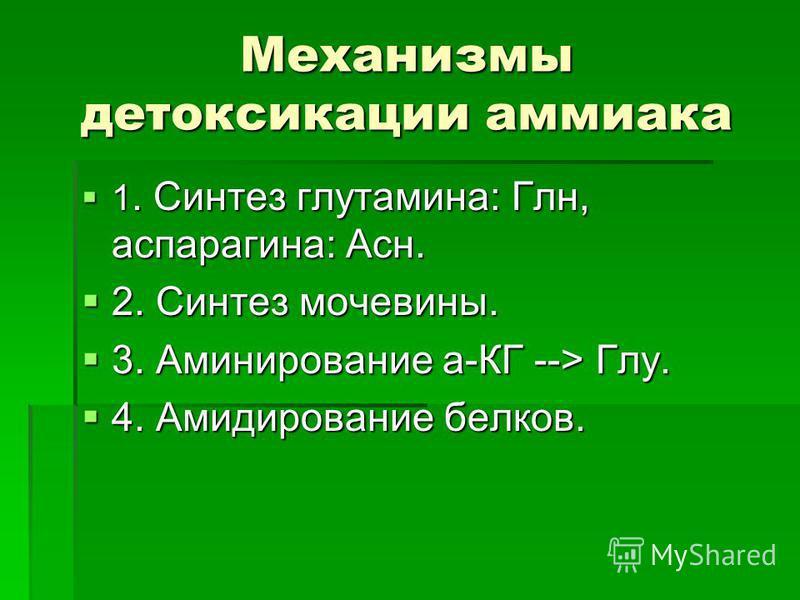 Механизмы детоксикации аммиака 1. Синтез глутамина: Глн, аспарагина: Асн. 1. Синтез глутамина: Глн, аспарагина: Асн. 2. Синтез мочевины. 2. Синтез мочевины. 3. Аминирование а-КГ --> Глу. 3. Аминирование а-КГ --> Глу. 4. Амидирование белков. 4. Амидир