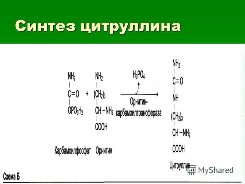 Синтез цитруллина