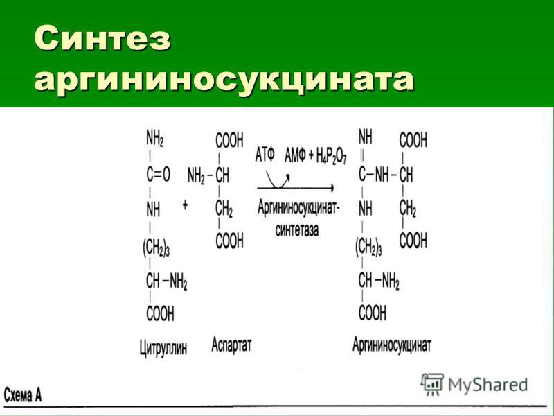 Синтез аргининосукцината