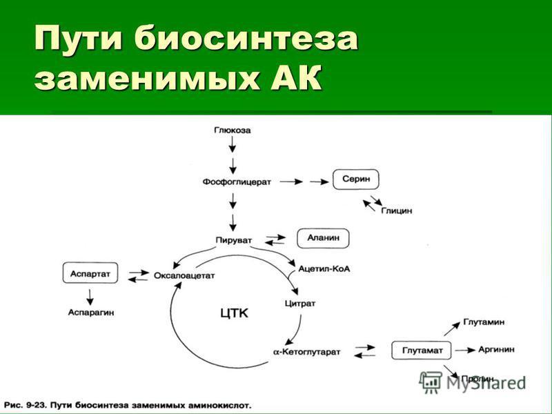 Пути биосинтеза заменимых АК