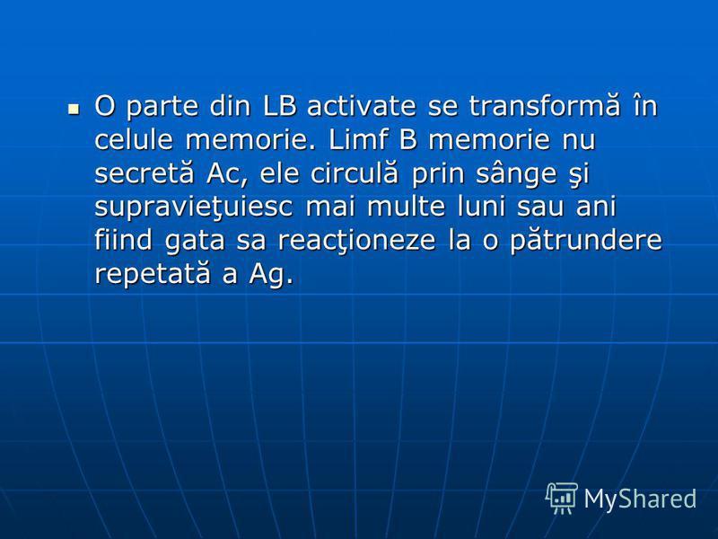 O parte din LB activate se transformă în celule memorie. Limf B memorie nu secretă Ac, ele circulă prin sânge şi supravieţuiesc mai multe luni sau ani fiind gata sa reacţioneze la o pătrundere repetată a Ag. O parte din LB activate se transformă în c