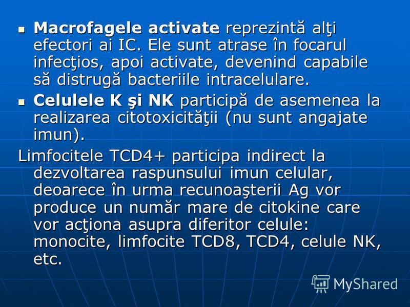 Macrofagele activate reprezintă alţi efectori ai IC. Ele sunt atrase în focarul infecţios, apoi activate, devenind capabile să distrugă bacteriile intracelulare. Macrofagele activate reprezintă alţi efectori ai IC. Ele sunt atrase în focarul infecţio