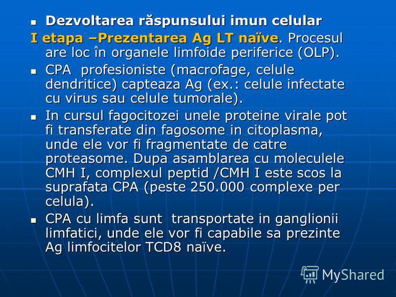 Dezvoltarea răspunsului imun celular Dezvoltarea răspunsului imun celular I etapa –Prezentarea Ag LT naïve. Procesul are loc în organele limfoide periferice (OLP). CPA profesioniste (macrofage, celule dendritice) capteaza Ag (ex.: celule infectate cu