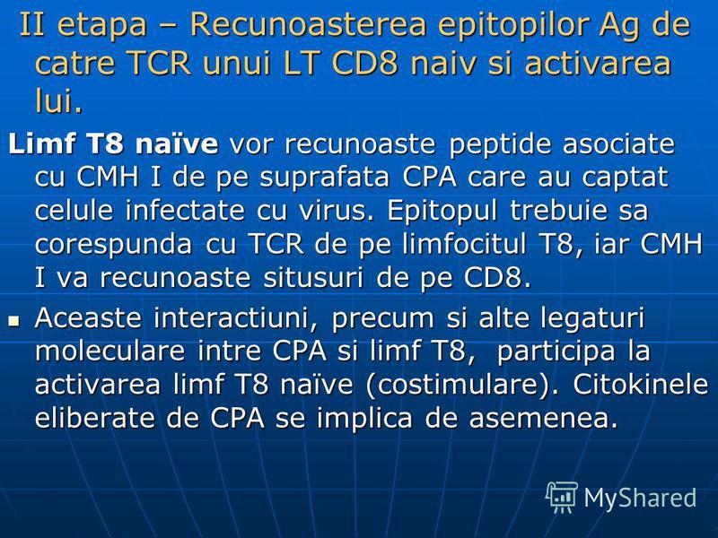 II etapa – Recunoasterea epitopilor Ag de catre TCR unui LT CD8 naiv si activarea lui. II etapa – Recunoasterea epitopilor Ag de catre TCR unui LT CD8 naiv si activarea lui. Limf T8 naïve vor recunoaste peptide asociate cu CMH I de pe suprafata CPA c
