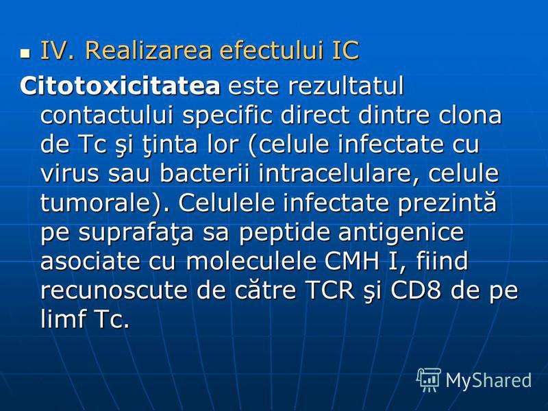 IV. Realizarea efectului IC IV. Realizarea efectului IC Citotoxicitatea este rezultatul contactului specific direct dintre clona de Tc şi ţinta lor (celule infectate cu virus sau bacterii intracelulare, celule tumorale). Celulele infectate prezintă p