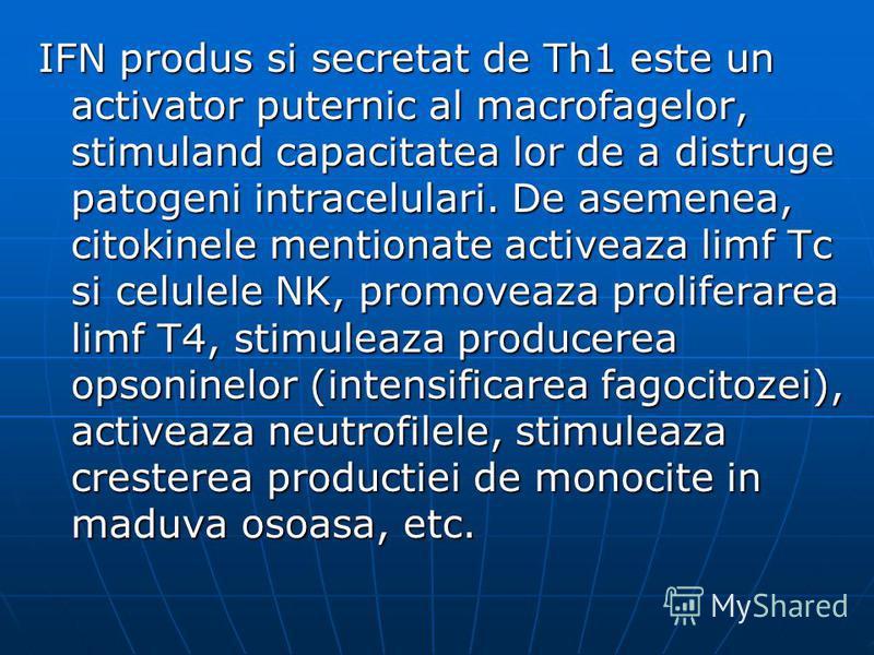 IFN produs si secretat de Th1 este un activator puternic al macrofagelor, stimuland capacitatea lor de a distruge patogeni intracelulari. De asemenea, citokinele mentionate activeaza limf Tc si celulele NK, promoveaza proliferarea limf T4, stimuleaza
