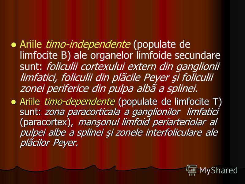Ariile timo-independente (populate de limfocite B) ale organelor limfoide secundare sunt: foliculii cortexului extern din ganglionii limfatici, foliculii din plãcile Peyer şi foliculii zonei periferice din pulpa albã a splinei. Ariile timo-dependente