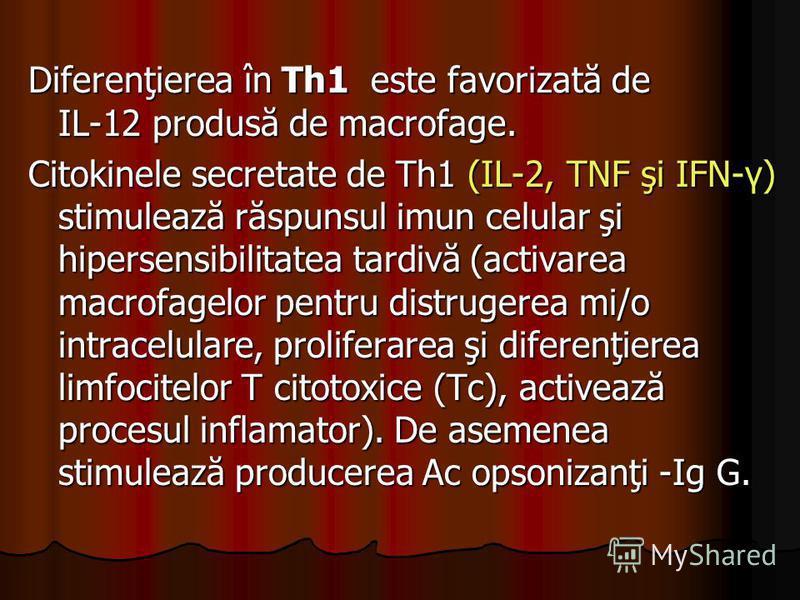 Diferenţierea în Th1 este favorizată de IL-12 produsă de macrofage. Citokinele secretate de Th1 (IL-2, TNF şi IFN-γ) stimulează răspunsul imun celular şi hipersensibilitatea tardivă (activarea macrofagelor pentru distrugerea mi/o intracelulare, proli