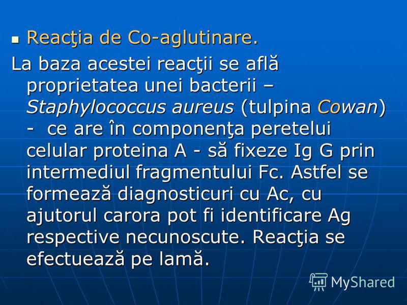 Reacţia de Co-aglutinare. Reacţia de Co-aglutinare. La baza acestei reacţii se află proprietatea unei bacterii – Staphylococcus aureus (tulpina Cowan) - ce are în componenţa peretelui celular proteina A - să fixeze Ig G prin intermediul fragmentului