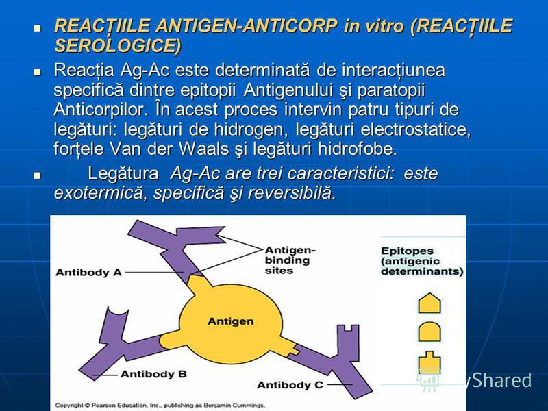 REACŢIILE ANTIGEN-ANTICORP in vitro (REACŢIILE SEROLOGICE) REACŢIILE ANTIGEN-ANTICORP in vitro (REACŢIILE SEROLOGICE) Reacţia Ag-Ac este determinată de interacţiunea specifică dintre epitopii Antigenului şi paratopii Anticorpilor. În acest proces int