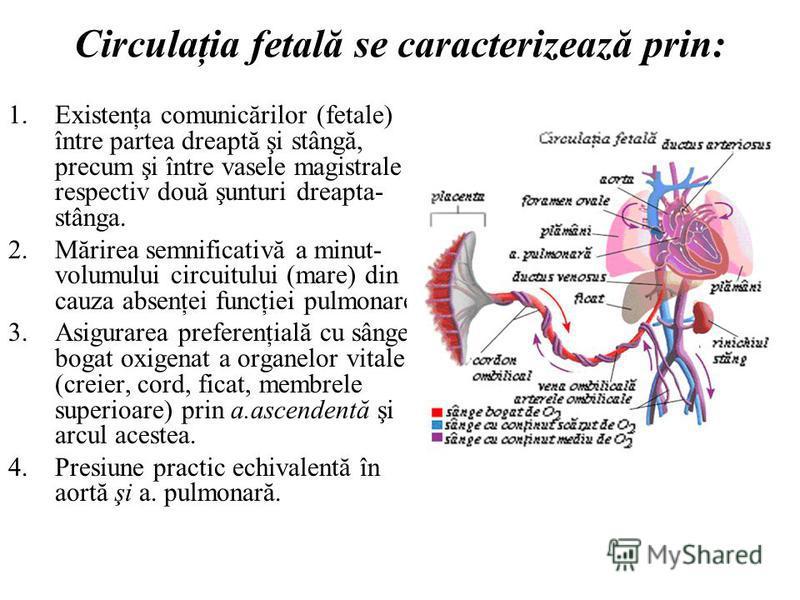 Circulaţia fetală se caracterizează prin: 1.Existenţa comunicărilor (fetale) între partea dreaptă şi stângă, precum şi între vasele magistrale – respectiv două şunturi dreapta- stânga. 2.Mărirea semnificativă a minut- volumului circuitului (mare) din