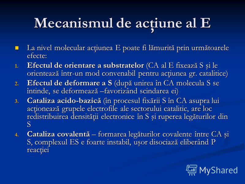 Mecanismul de acţiune al E La nivel molecular acţiunea E poate fi lămurită prin următoarele efecte: La nivel molecular acţiunea E poate fi lămurită prin următoarele efecte: 1. Efectul de orientare a substratelor (CA al E fixează S şi le orientează în