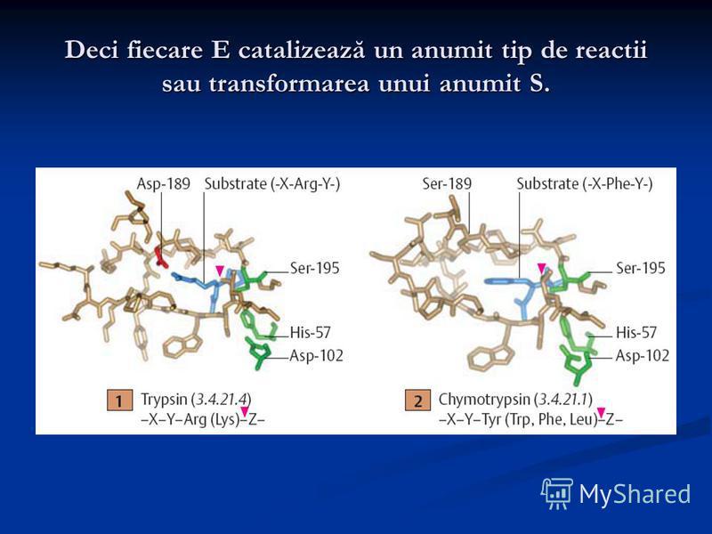Deci fiecare E catalizează un anumit tip de reactii sau transformarea unui anumit S.