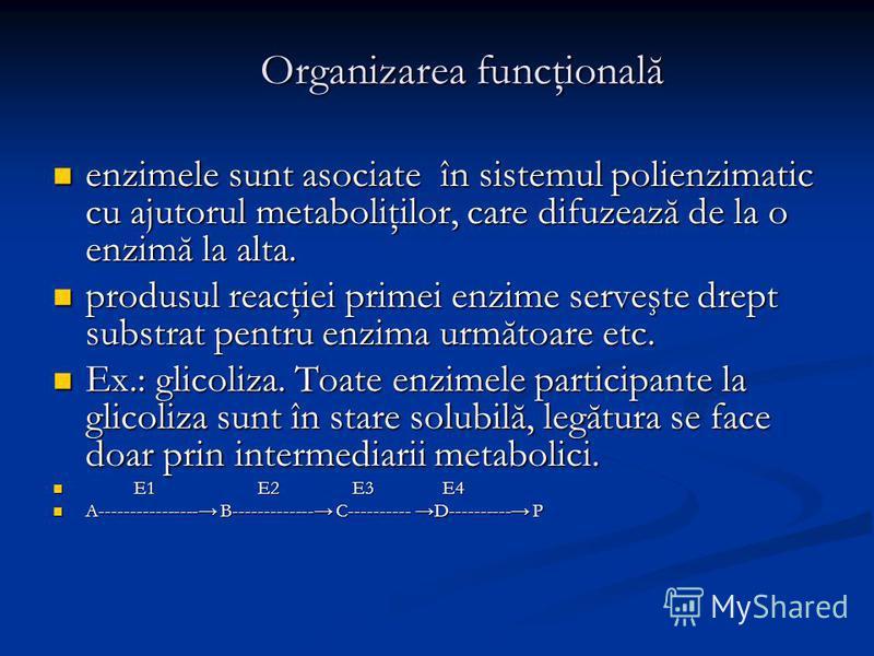 Organizarea funcţională enzimele sunt asociate în sistemul polienzimatic cu ajutorul metaboliţilor, care difuzează de la o enzimă la alta. enzimele sunt asociate în sistemul polienzimatic cu ajutorul metaboliţilor, care difuzează de la o enzimă la al