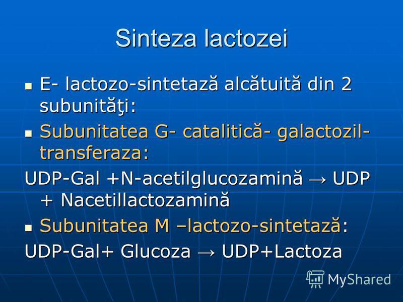 Sinteza lactozei E- lactozo-sintetază alcătuită din 2 subunităţi: E- lactozo-sintetază alcătuită din 2 subunităţi: Subunitatea G- catalitică- galactozil- transferaza: Subunitatea G- catalitică- galactozil- transferaza: UDP-Gal +N-acetilglucozamină UD