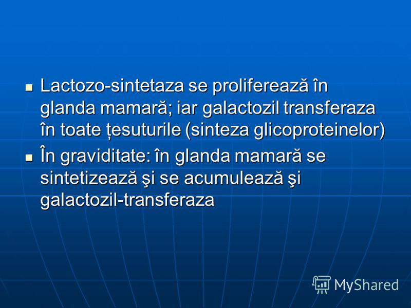 Lactozo-sintetaza se proliferează în glanda mamară; iar galactozil transferaza în toate ţesuturile (sinteza glicoproteinelor) Lactozo-sintetaza se proliferează în glanda mamară; iar galactozil transferaza în toate ţesuturile (sinteza glicoproteinelor