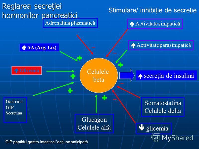 GIP:peptidul gastro-intestinal/ acţiune anticipată Celulele beta secreţia de insulină Gastrina GIP Secretina Glucagon Celulele alfa Glicemia AA (Arg, Liz) Somatostatina Celulele delta – – Adrenalina plasmatică Activitate parasimpatică Activitate simp