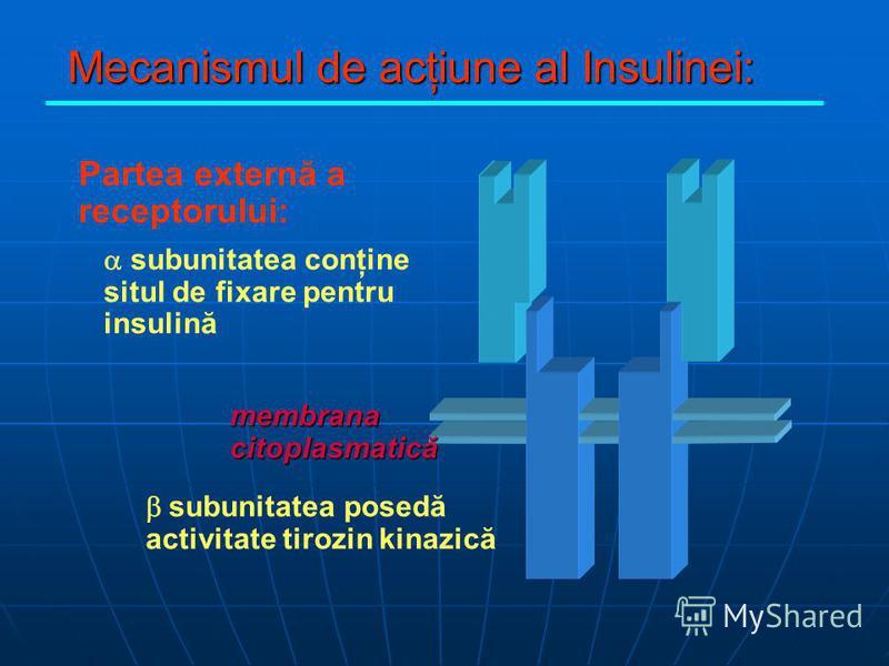 Mecanismul de acţiune al Insulinei: Partea externă a receptorului: subunitatea conţine situl de fixare pentru insulină subunitatea posedă activitate tirozin kinazică membrana citoplasmatică