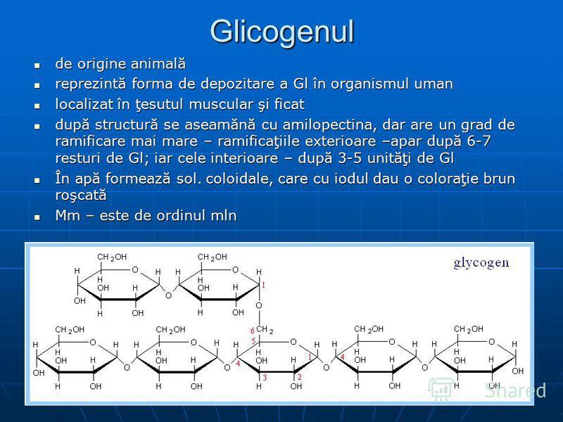 Glicogenul de origine animală de origine animală reprezintă forma de depozitare a Gl în organismul uman reprezintă forma de depozitare a Gl în organismul uman localizat în ţesutul muscular şi ficat localizat în ţesutul muscular şi ficat după structur