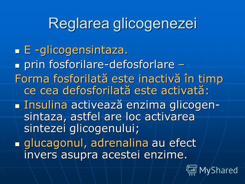 Reglarea glicogenezei E -glicogensintaza. E -glicogensintaza. prin fosforilare-defosforlare – prin fosforilare-defosforlare – Forma fosforilată este inactivă în timp ce cea defosforilată este activată: Insulina activează enzima glicogen- sintaza, ast