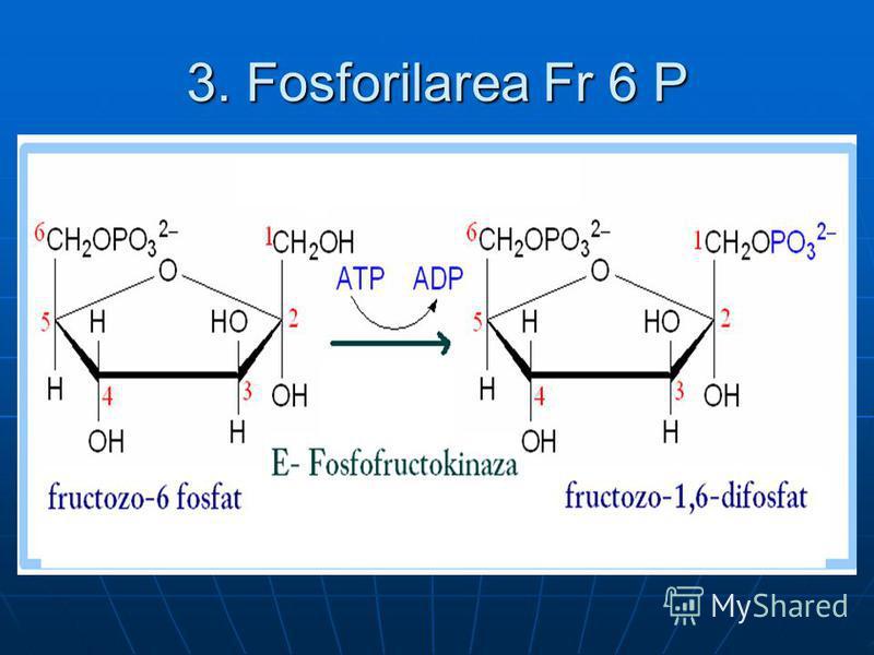 3. Fosforilarea Fr 6 P