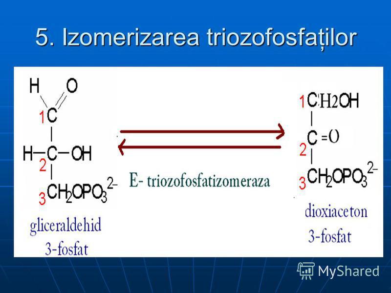 5. Izomerizarea triozofosfaţilor