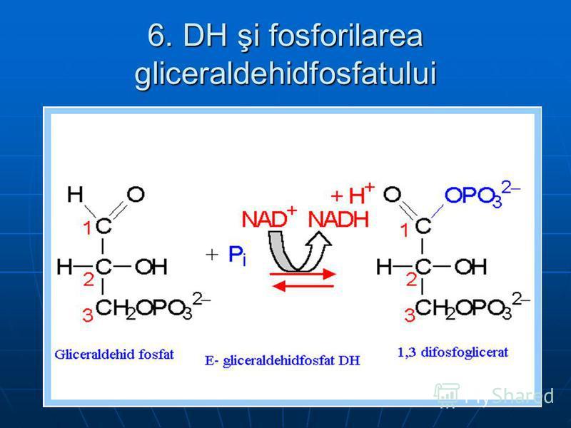 6. DH şi fosforilarea gliceraldehidfosfatului
