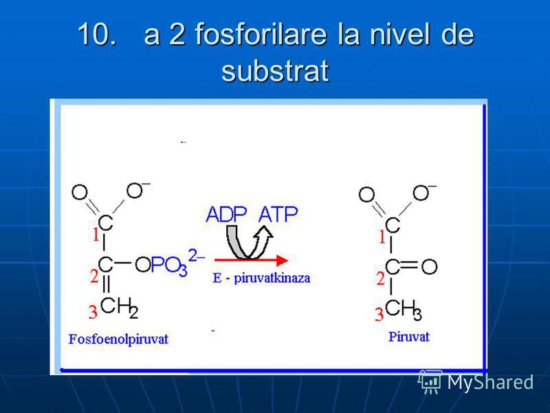 10. a 2 fosforilare la nivel de substrat