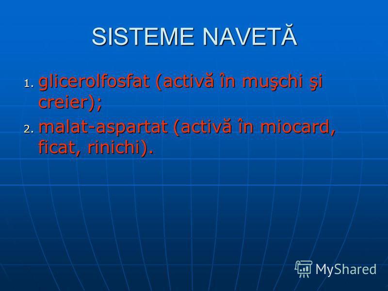 SISTEME NAVETĂ 1. glicerolfosfat (activă în muşchi şi creier); 2. malat-aspartat (activă în miocard, ficat, rinichi).