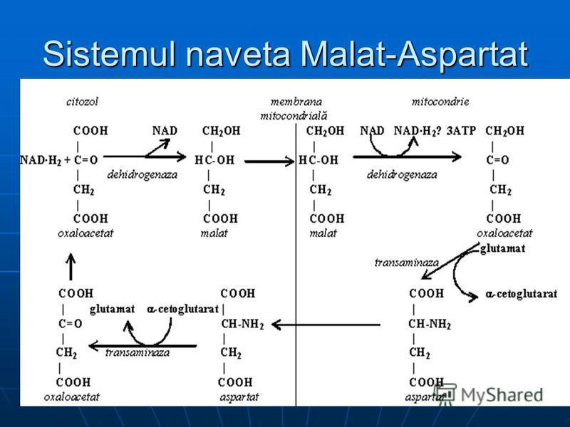 Sistemul naveta Malat-Aspartat