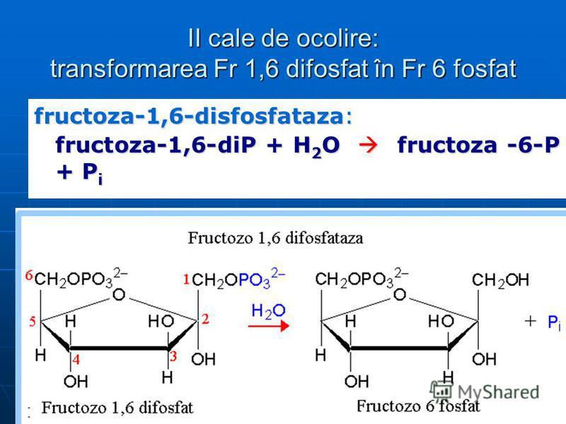 II cale de ocolire: transformarea Fr 1,6 difosfat în Fr 6 fosfat fructoza-1,6-disfosfataza: fructoza-1,6-diP + H 2 O fructoza -6-P + P i