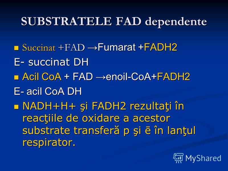 SUBSTRATELE FAD dependente Succinat +FADFumarat +FADH2 Succinat +FADFumarat +FADH2 E- succinat DH Acil CoA + FAD enoil-CoA+FADH2 Acil CoA + FAD enoil-CoA+FADH2 E- acil CoA DH NADH+H+ şi FADH2 rezultaţi în reacţiile de oxidare a acestor substrate tran