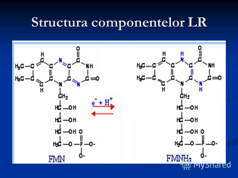 Structura componentelor LR