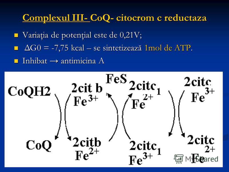 Complexul III- CoQ- citocrom c reductaza Variaţia de potenţial este de 0,21V; Variaţia de potenţial este de 0,21V; ΔG0 = -7,75 kcal – se sintetizează 1mol de ATP. ΔG0 = -7,75 kcal – se sintetizează 1mol de ATP. Inhibat antimicina A Inhibat antimicina