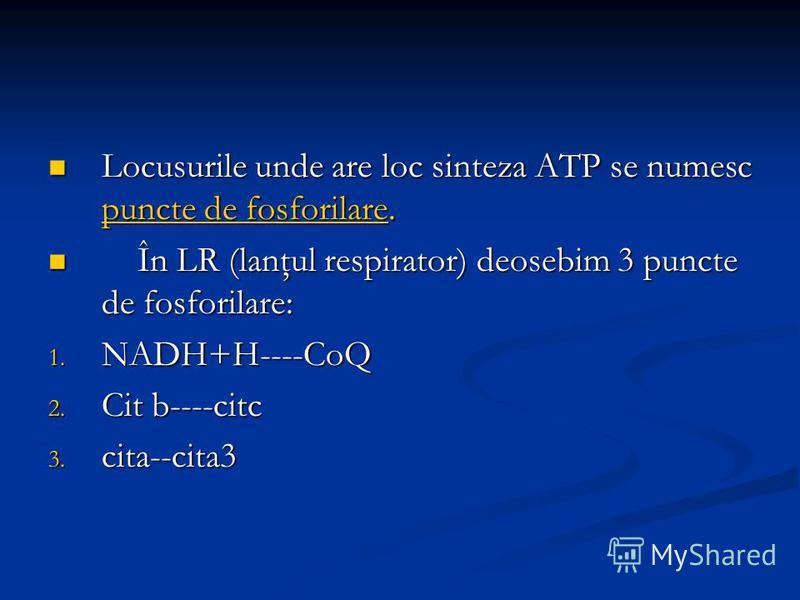 Locusurile unde are loc sinteza ATP se numesc puncte de fosforilare. Locusurile unde are loc sinteza ATP se numesc puncte de fosforilare. În LR (lanţul respirator) deosebim 3 puncte de fosforilare: În LR (lanţul respirator) deosebim 3 puncte de fosfo